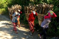 Women Carrying Wood, Annapurnas